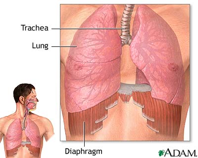 Diaphragmatic Breathing - Essential to Yoga Meditation